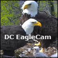 icon for DC EagleCam
